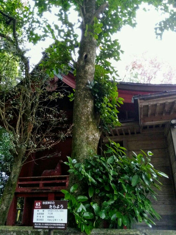秋保神社の縁結びの木 たらよう