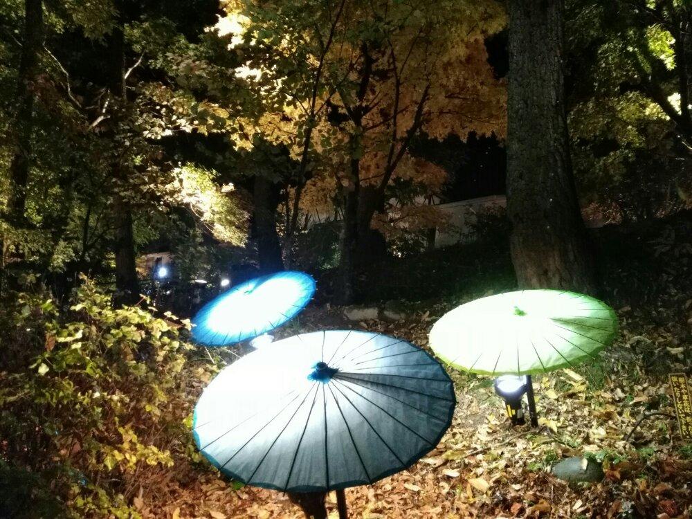 もみじのこみちライトアップ 傘の華