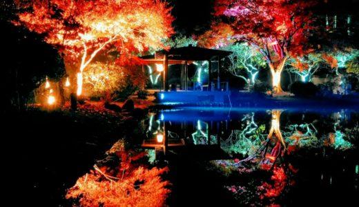 【体験レポート】秋保ナイトミュージアム|神秘的な紅葉ライトアップに感動!