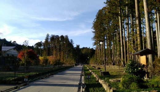 【松島さんぽ】瑞巌寺参道と寺町小路|紅葉や洞窟、杉林など