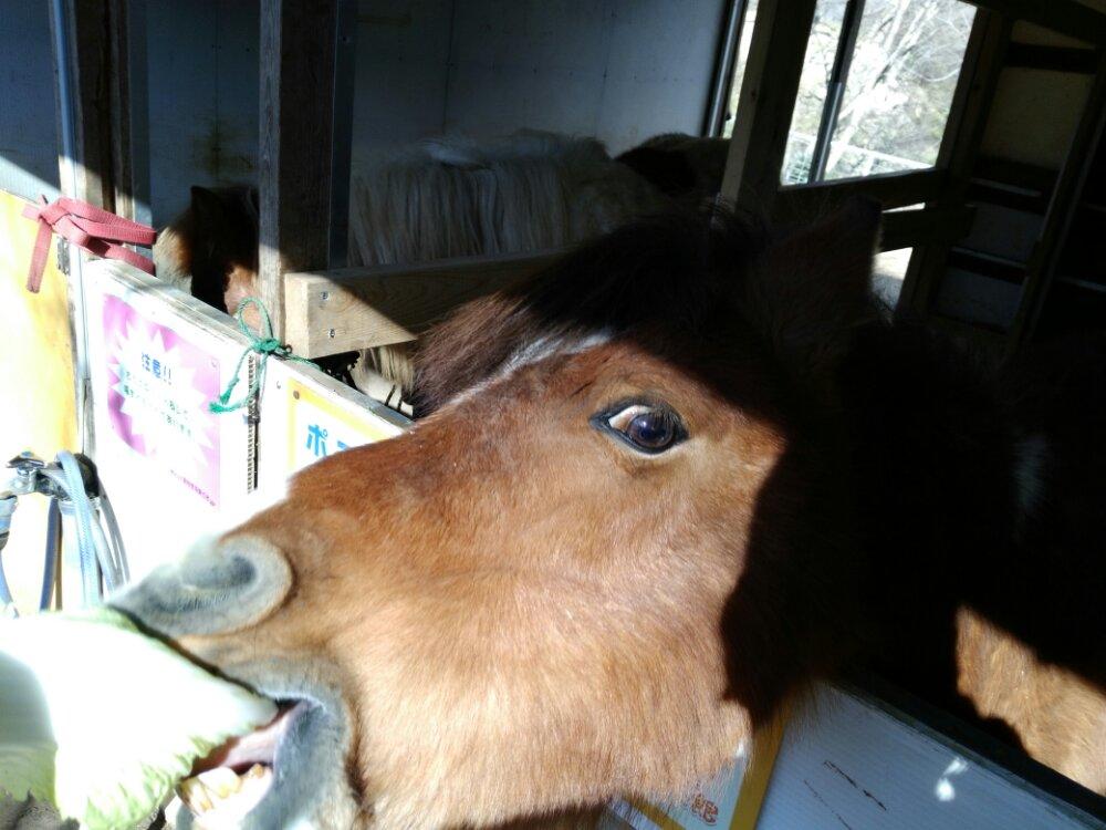 白菜を食べる馬