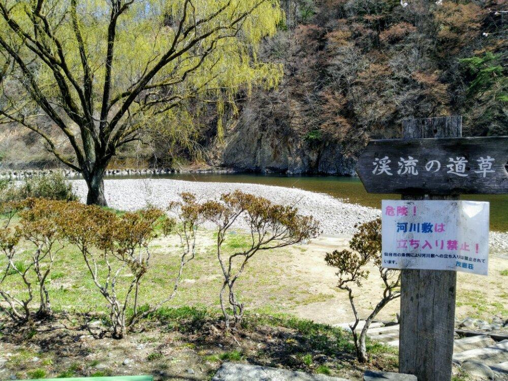 渓流の道草