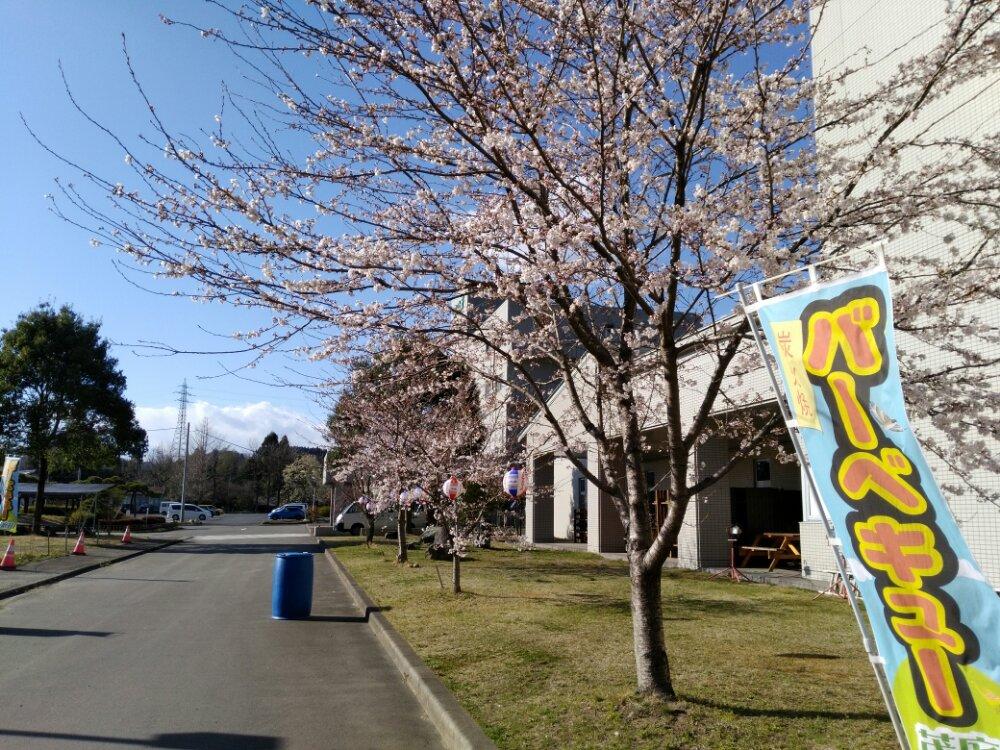 茂庭荘の桜