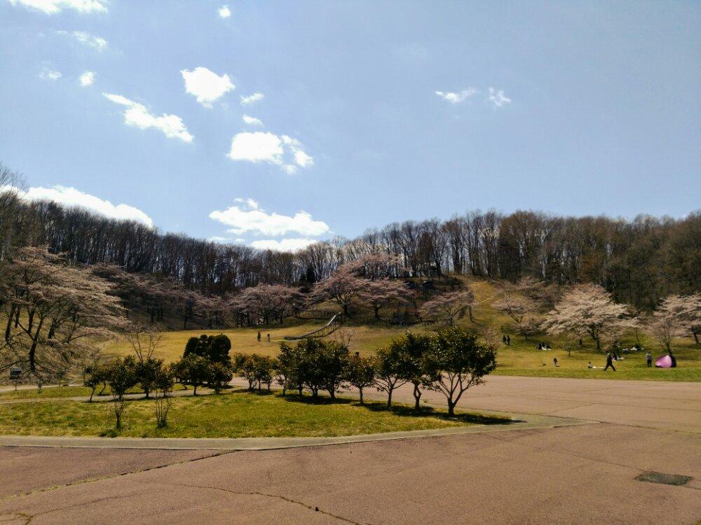 こども広場の桜