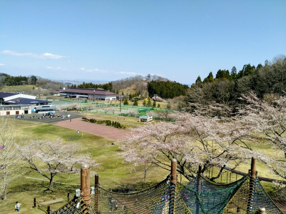 頂上からの桜