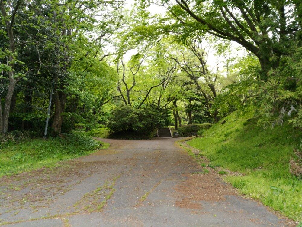 仙台市博物館から仙台城への道