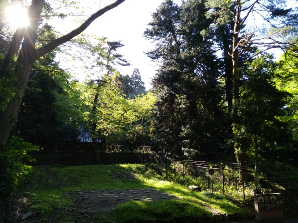 瑞鳳殿のコウヤマキ