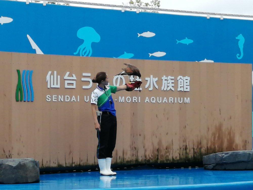 仙台うみの杜水族館のバードショー