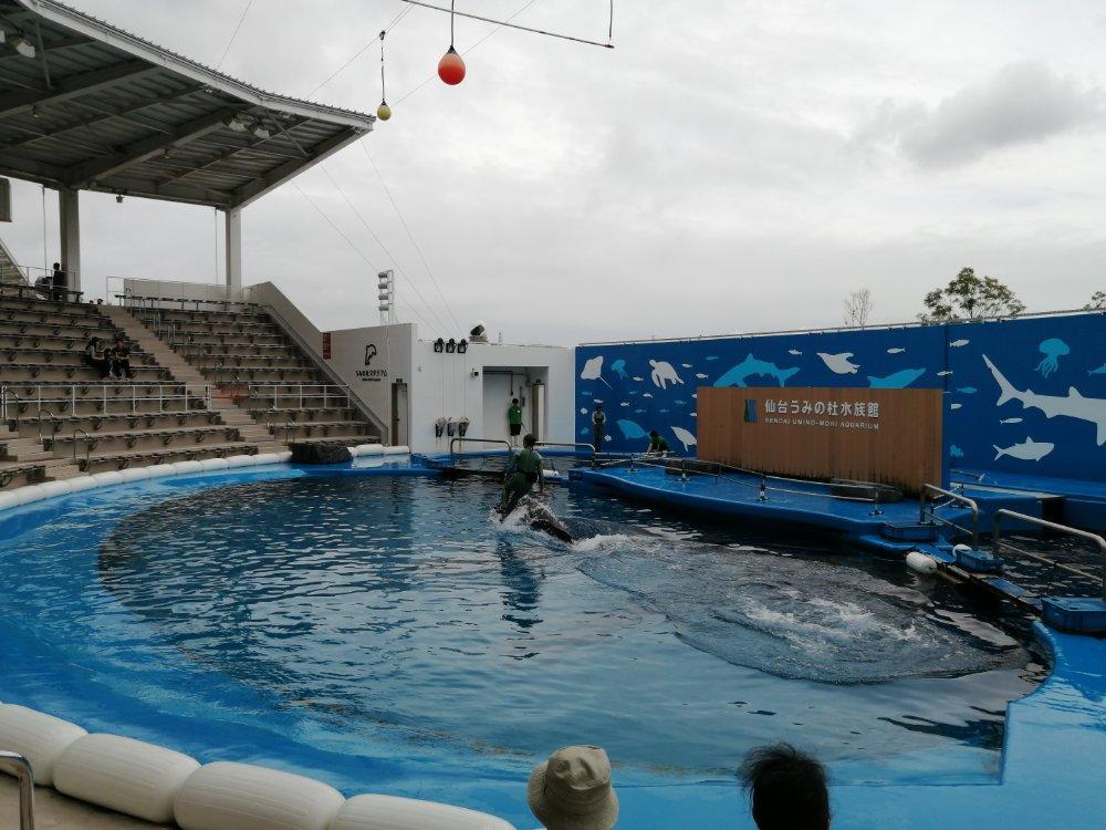 イルカに乗る飼育員