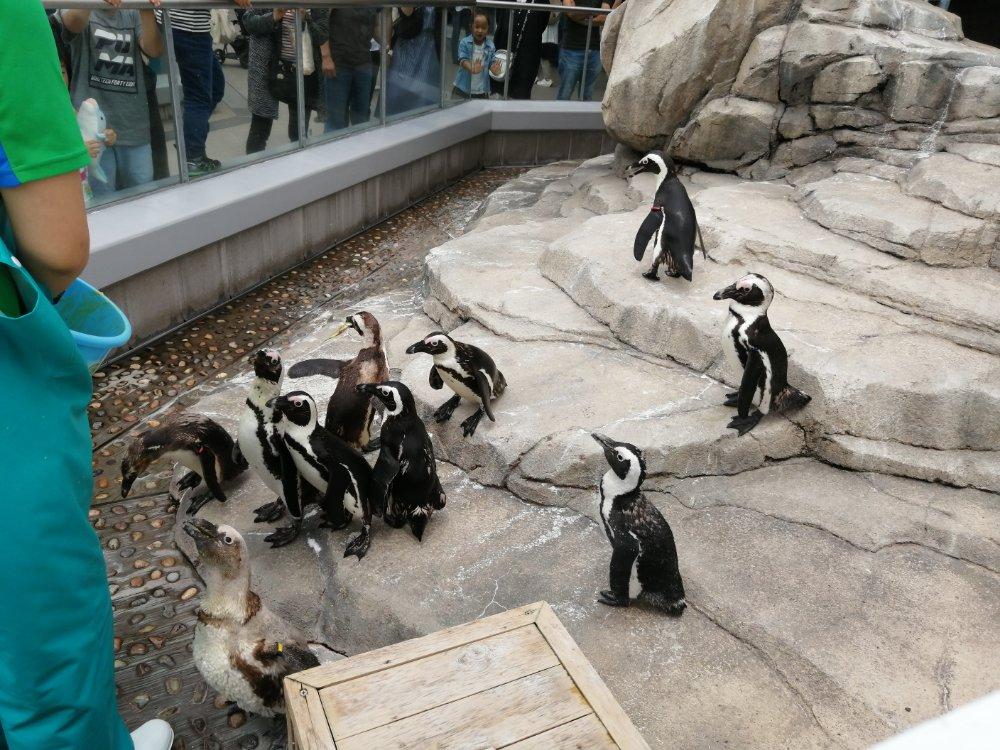 仙台うみの杜水族館でペンギンにエサやり