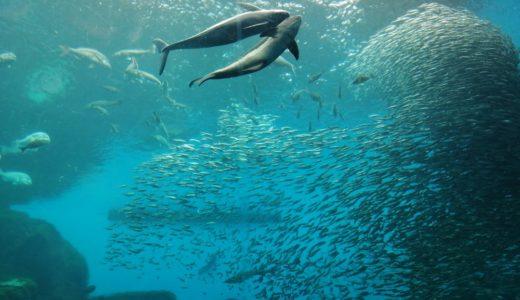 仙台うみの杜水族館に行く前に|イルカショーを7倍楽しむ方法&フードコートのおすすめメニュー