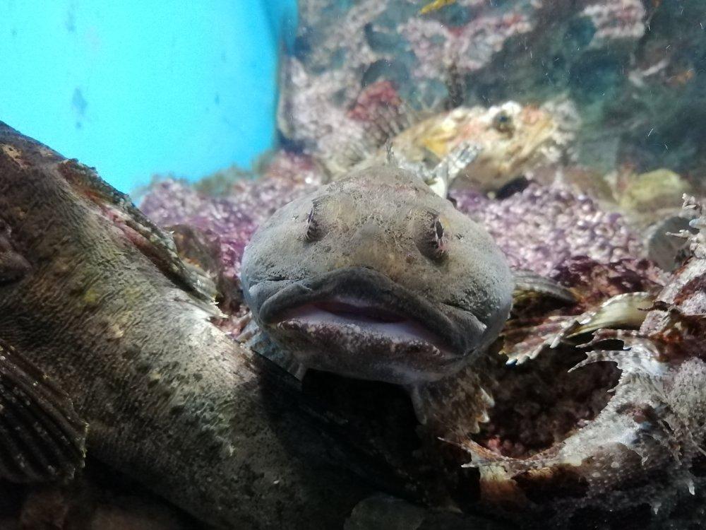 仙台うみの杜水族館のナマズ