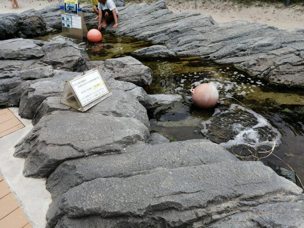 魚のいるプール