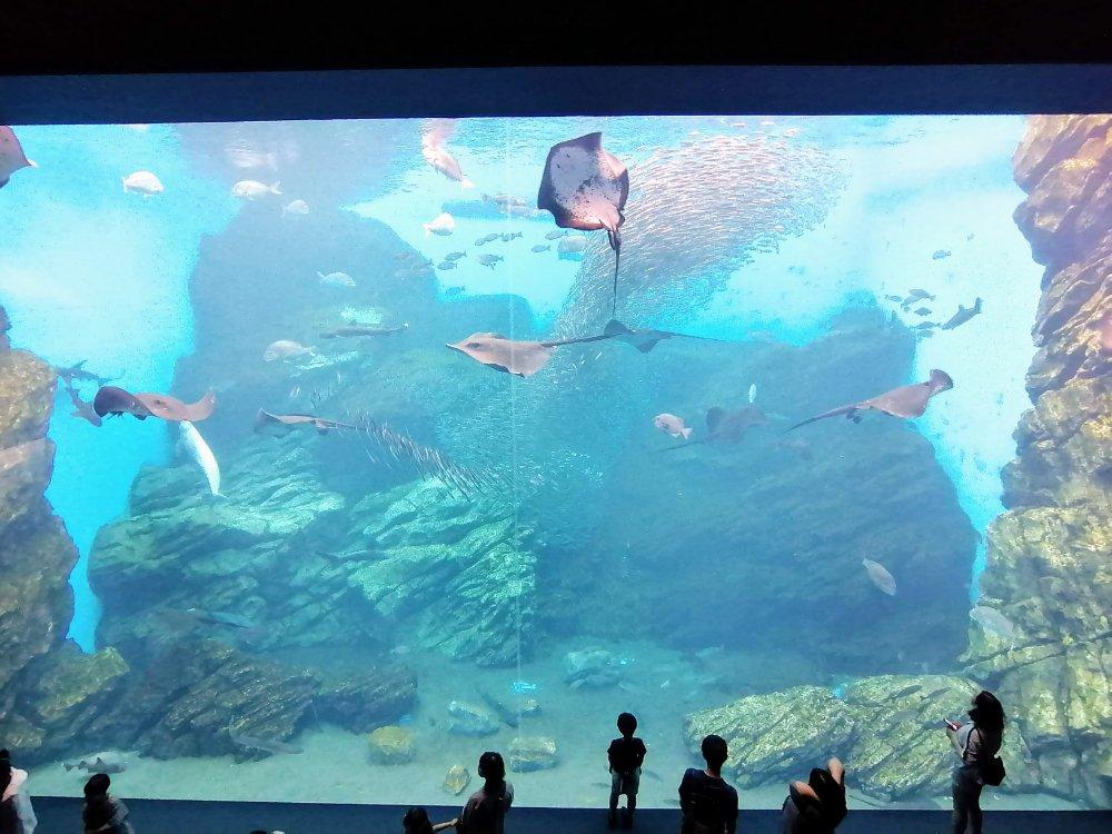 仙台海のもり水族館