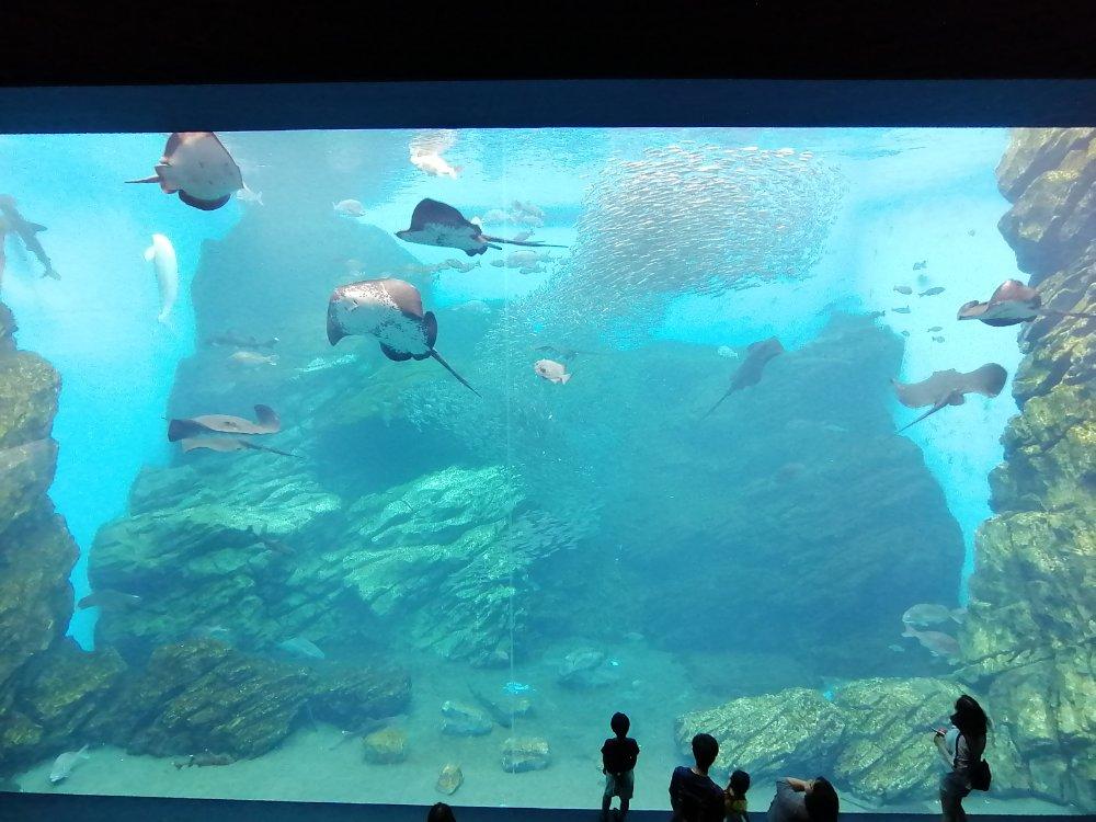 仙台うみの杜水族館の大水槽