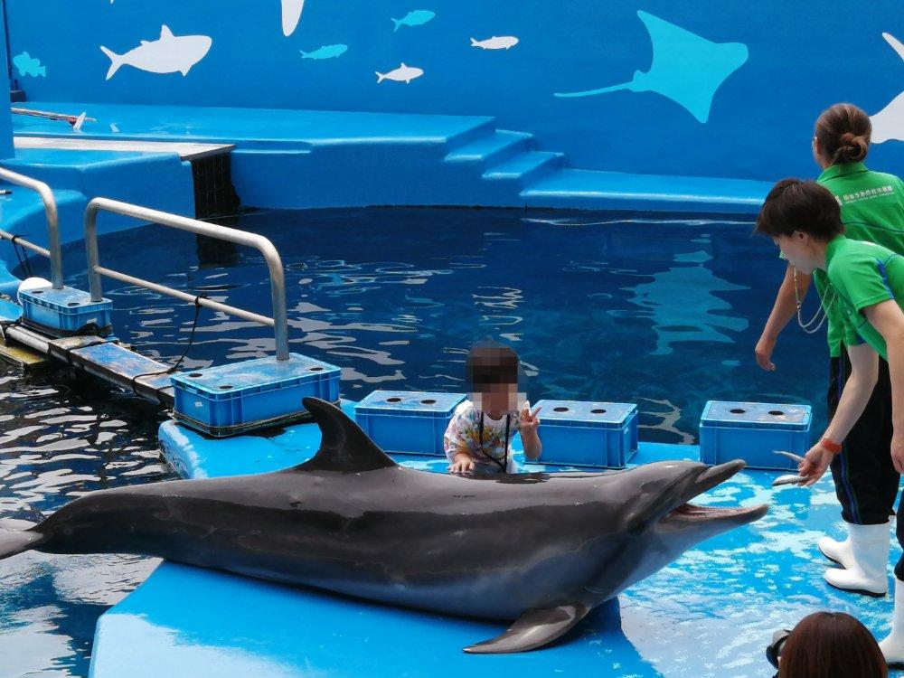 仙台うみの杜水族館のイルカタッチフォト