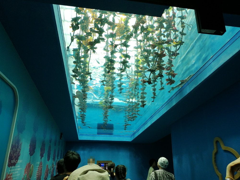 入口の天井水槽