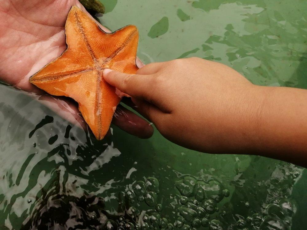 仙台うみの杜水族館でヒトデと触れ合い