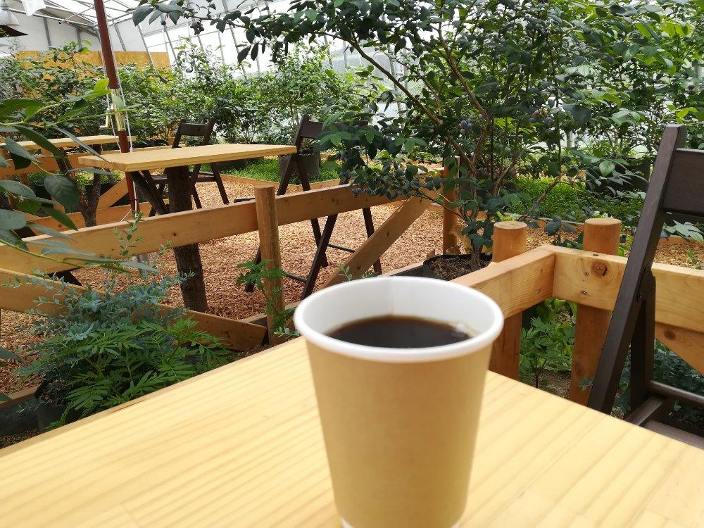 ビニールハウス内でコーヒー