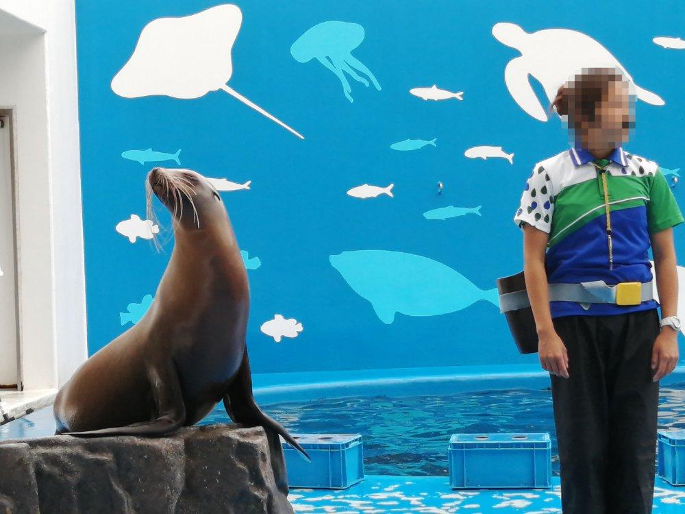 仙台うみの杜水族館のアシカショー