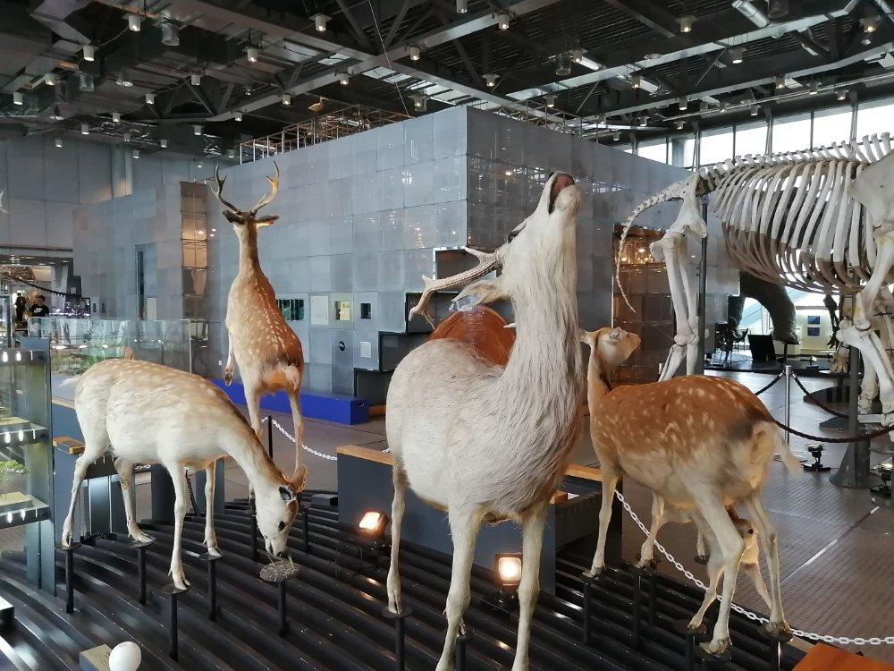仙台市科学館の自然史系展示