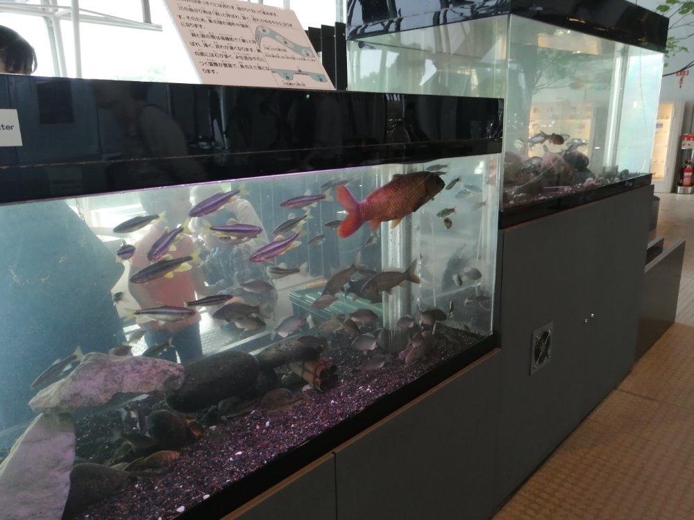 仙台市科学館の魚