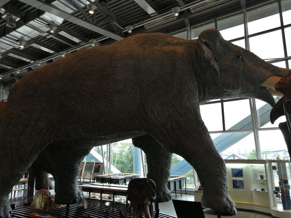 ゾウの展示