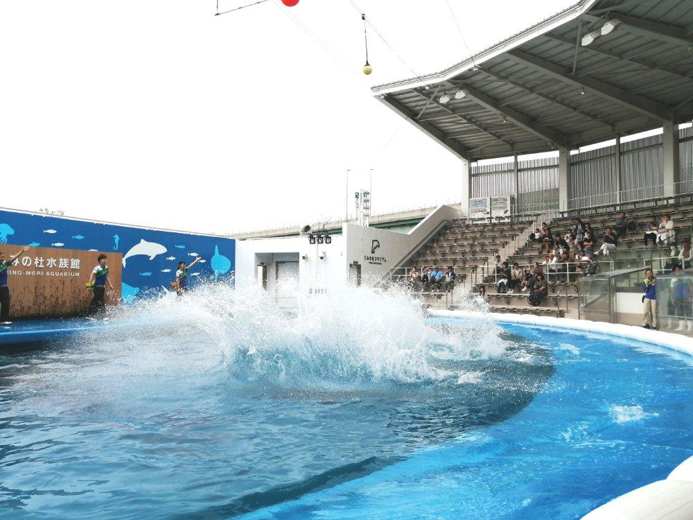 うみの杜水族館の夏のイルカショー STADIUM LIVE THE GROOVE ~Splash!!~