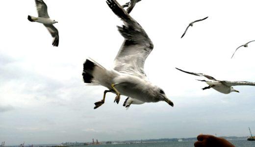 廃業直前のいわき遊覧船デイクルーズへ|カモメの餌づけが楽しい!
