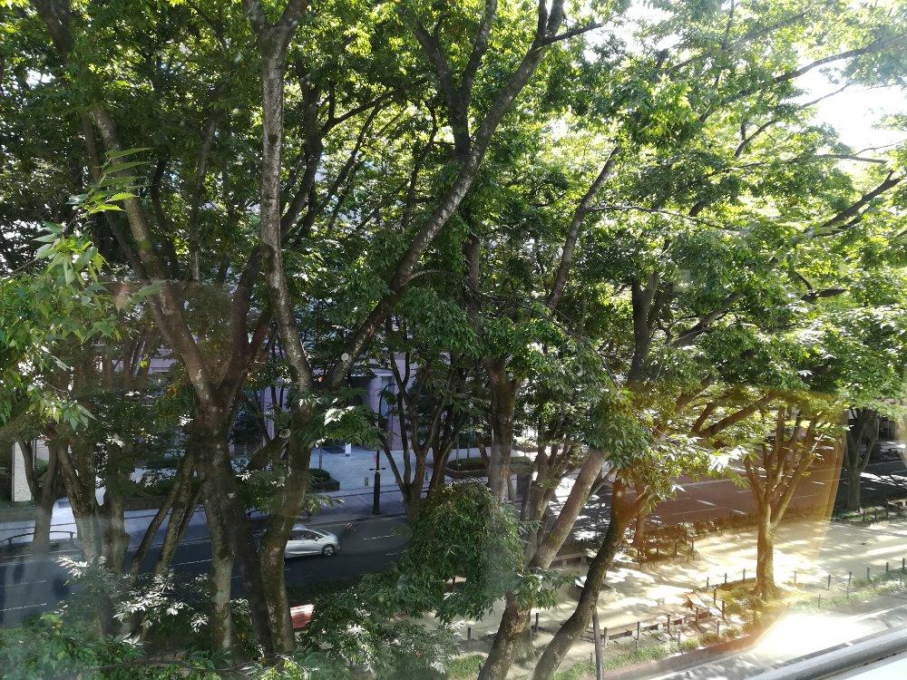 鉄板ダイニング譽から見える定禅寺通りのケヤキ並木