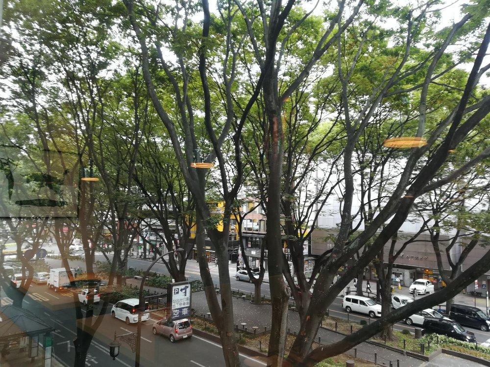 焼肉 泰山 定禅寺通り店から見たケヤキ並木