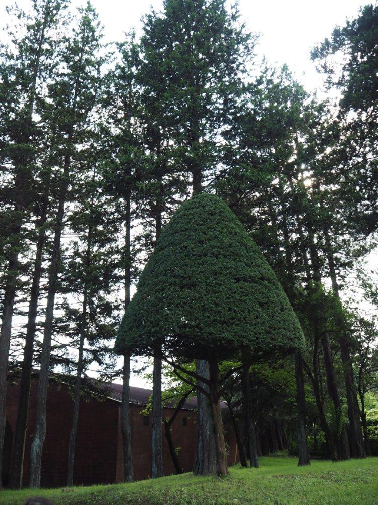 きのこ型の木