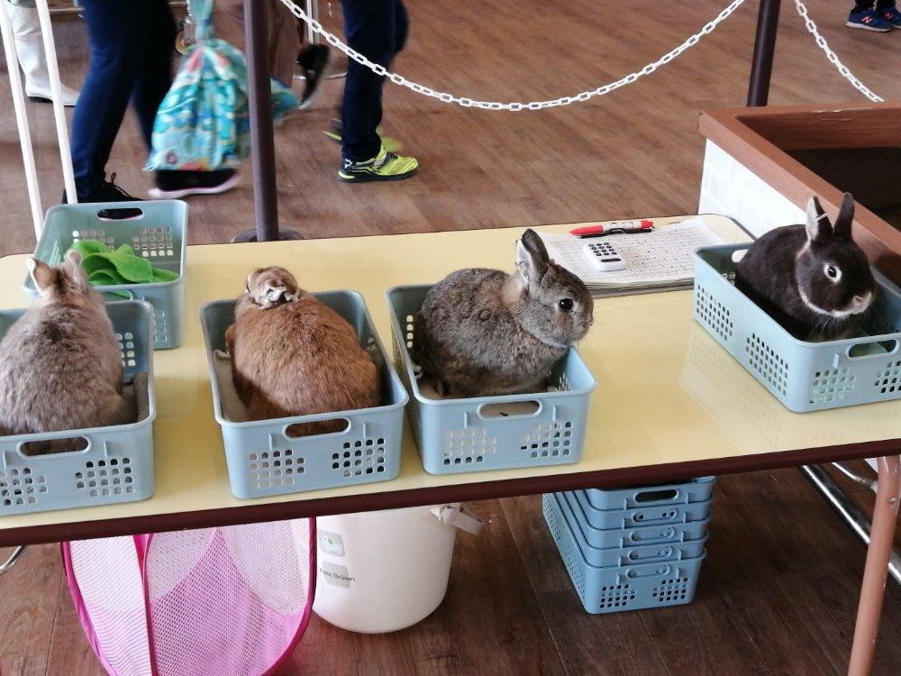 ウサギとのふれあい