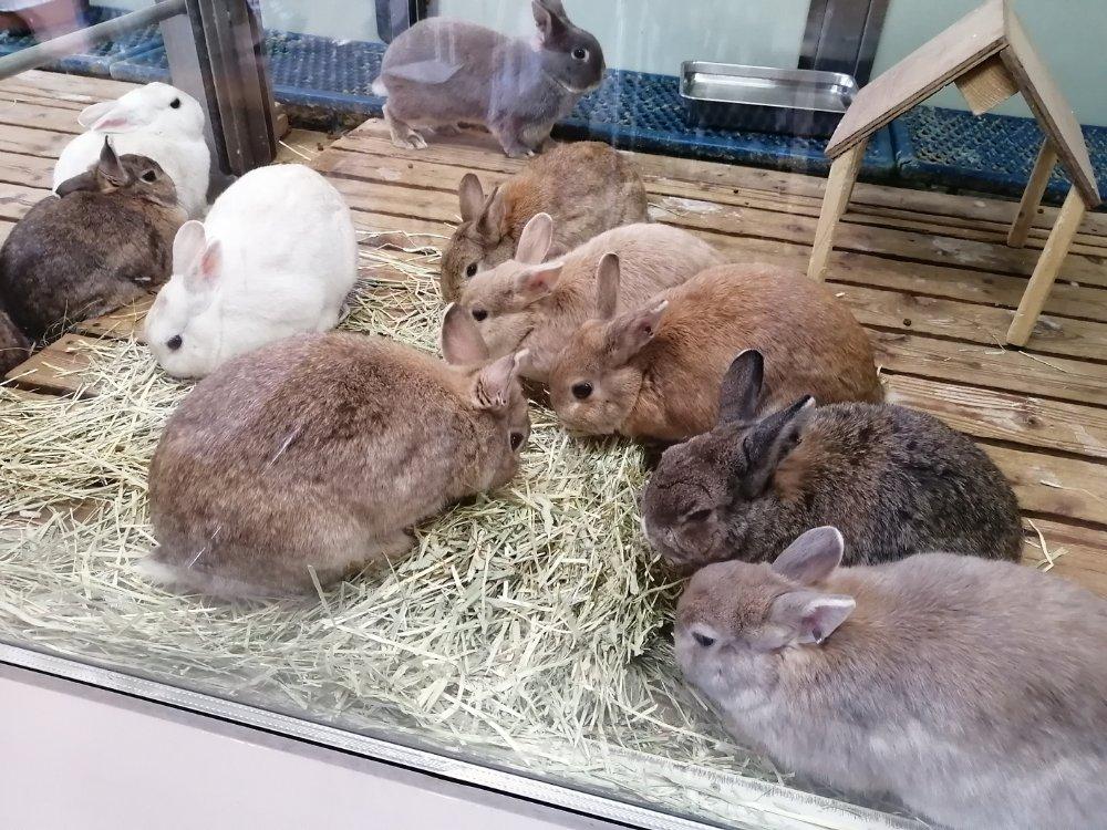 八木山動物公園のウサギ