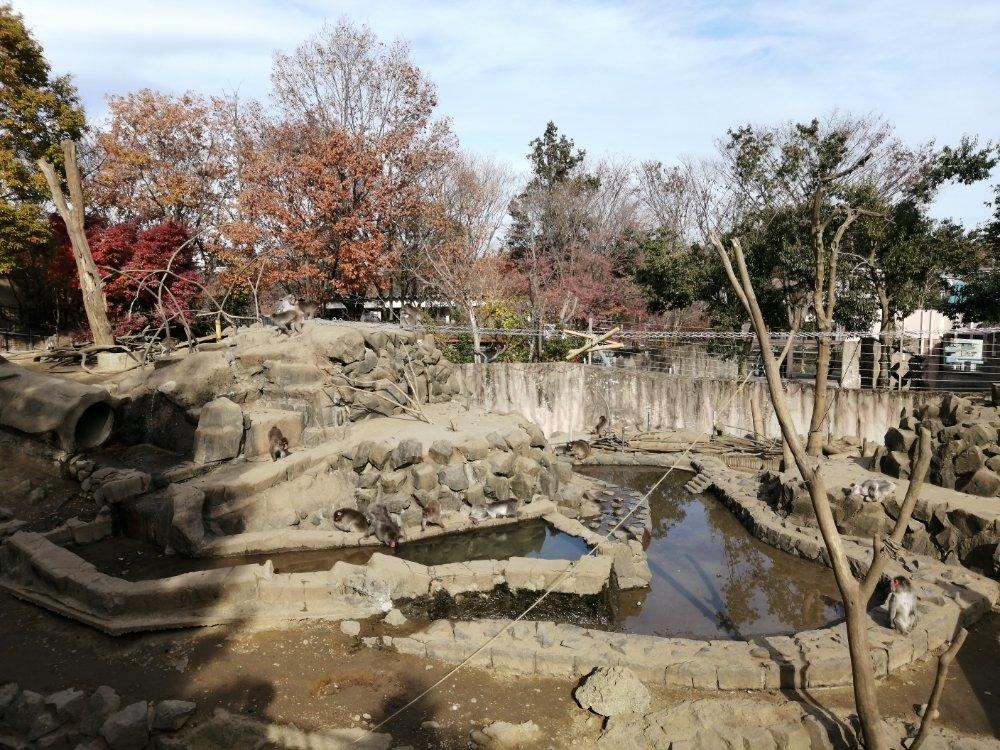 八木山動物公園のサル山