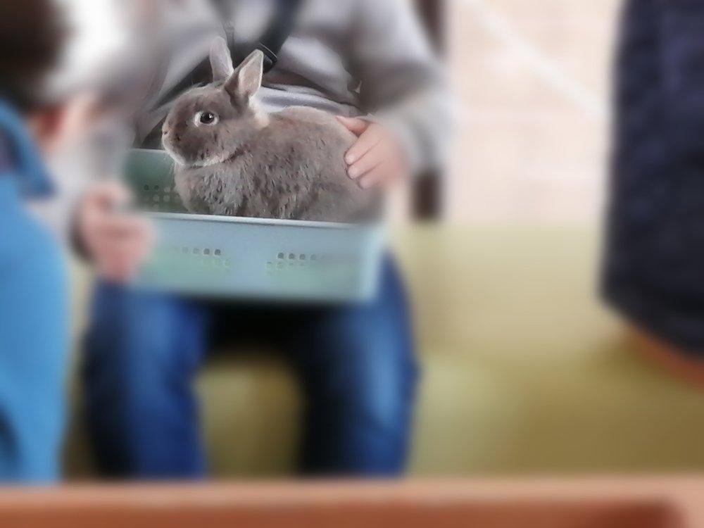 八木山動物公園でウサギ抱っこ