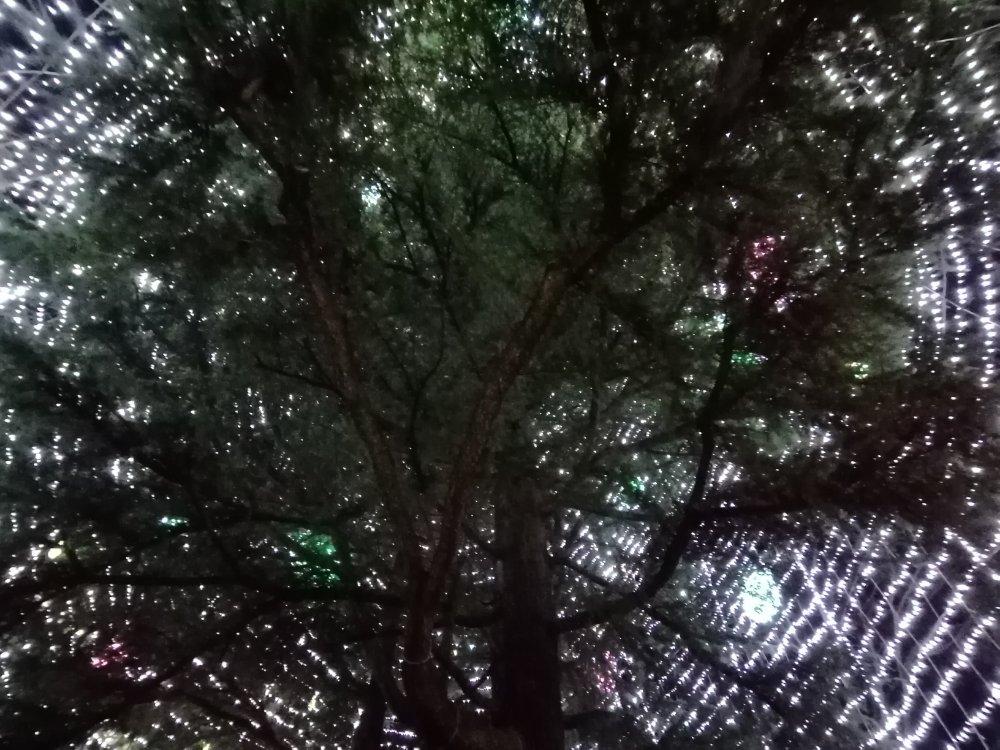 シンボルツリー(真下から)