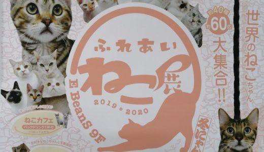 【イベント情報】イービーンズ仙台で「ふれあいねこ展」が開催|12月21日から