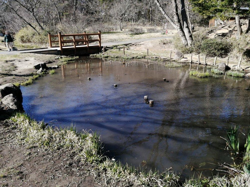 水の森公園の小川