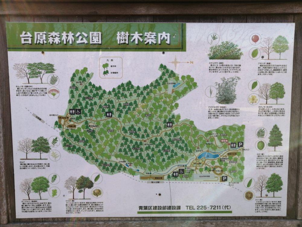 台原森林公園の樹木マップ