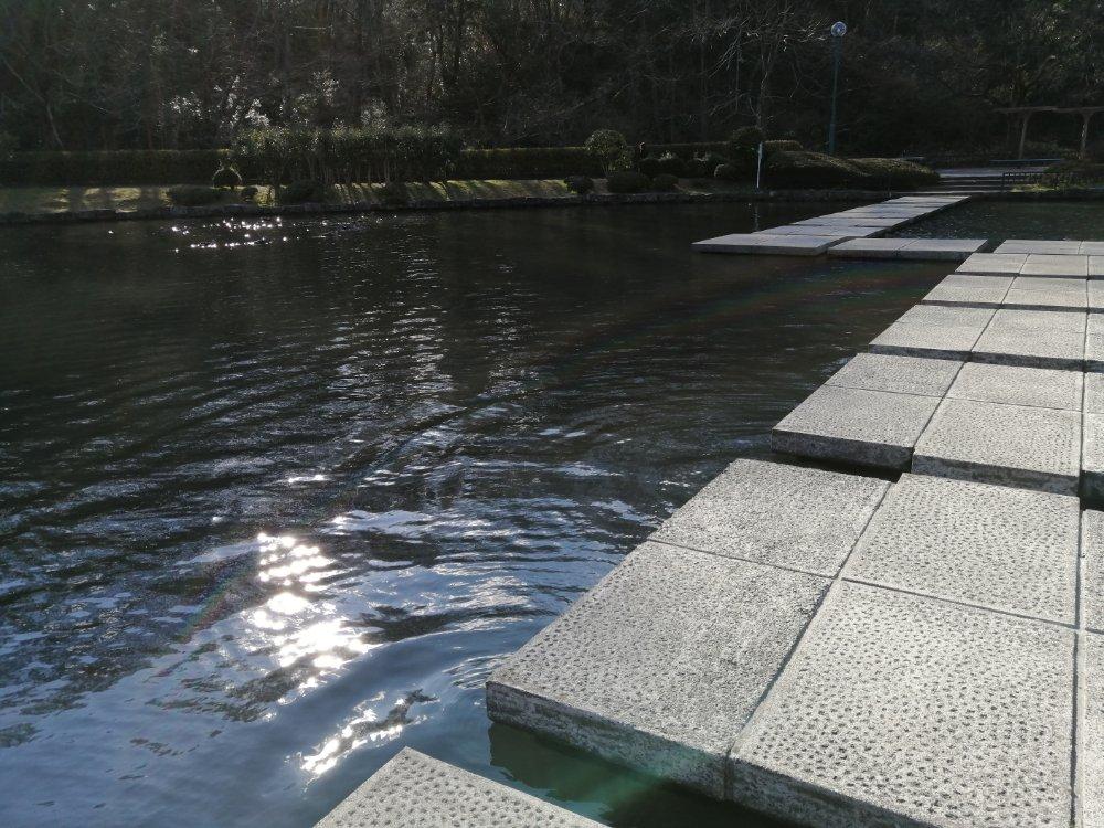 水が近くて楽しい池