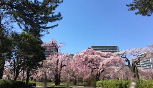 【速報】2021年の『榴岡公園 桜まつり』が開催中止に