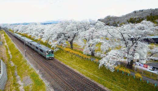 【2020年】一目千本桜の様子|さくら祭りは中止・柴田町長のコメントも
