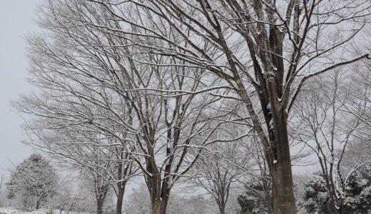 仙台で積雪8cm!1月6日宮城県の積雪・今後の天気・JR運行状況について