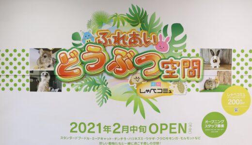 【新店情報】仙台駅前イービーンズに『ふれあい動物空間しゃべコミュ』が2月中旬オープン!