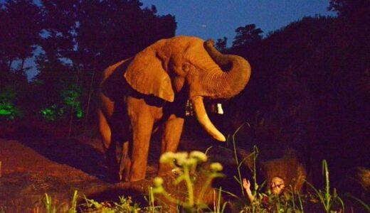 【イベント情報】八木山動物公園フジサキの杜でナイトズーシアム2021|事前予約制で夜間開園